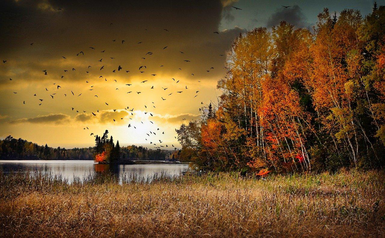 lake, autumn, sunset-6686836.jpg